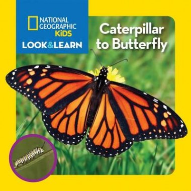 Nat Geo Kids Look And Learn Caterpillar To Butterfly
