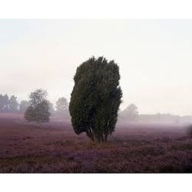 Anja Putensen :The Heath: Stories of Memories of a Historical Cultural Landscape